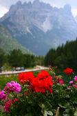 Flower on Italy mountains — Stock Photo