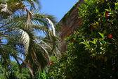 Palm garden — Stock Photo