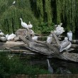 Pelicans family in the zoo-garden Berlin - Stock Photo
