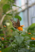 Butterfly on the Amsterdam Zoo — Stock Photo