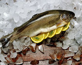 Trout on Ice — Stock Photo