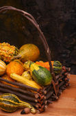 Basket of Gourds — Stock Photo