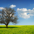 Lonely Tree in a Yellow Field — Stock Photo #2044715