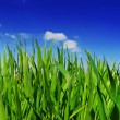 Royalty-Free Stock Photo: Fresh Grass