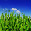Foto de Stock  : Fresh Grass