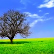 Lonely Tree in a Yellow Field - Foto de Stock