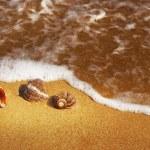 Seashell — Stock Photo #2075831