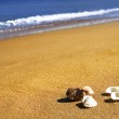 Summer, seashell, sand and the ocean — Stock Photo