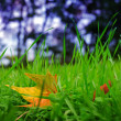 Stok fotoğraf: Fresh grass and autumn leaf