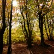 Morning in the forest - Stockfoto