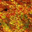 Colourful leaf texture - Stockfoto