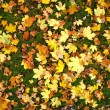 Leafs background texture — 图库照片