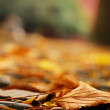 Orange leaf on the ground and defocused - Stockfoto