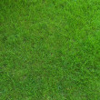 Stock Photo: Real green grass texture