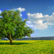 Lonely Tree in a Yellow Field — Stockfoto