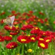 Stock Photo: Butterfly on a red flower.