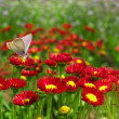 Stock Photo: Butterfly on red flower.