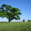 Big Green Tree - Stockfoto