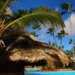 Palm and swimming pool - Stockfoto