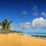 Tropical exotic beach, Punta cana — Stock Photo