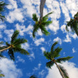 Exotic Palm Tree in the sky, Punta Cana - Lizenzfreies Foto