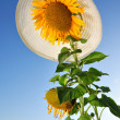 Beautiful sunflowers with blue sky — Stock Photo