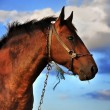 Horse and clouds - Stock Photo