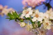 весной цвет — Стоковое фото