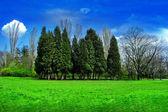 树景观 — 图库照片