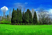Baum landschaft — Stockfoto
