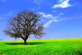 Lonely Tree in a Yellow Field — Stock Photo