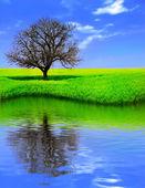 árvore solitária em um campo amarelo refletindo — Foto Stock