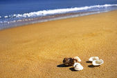 Summer, seashell, sand and the ocean — Stok fotoğraf