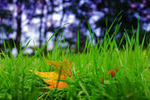 Fresh grass and autumn leaf — Stock Photo