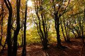 Mattina nella foresta — Foto Stock