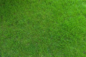 Real green grass texture — 图库照片