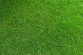 真正的绿色草地纹理 — 图库照片