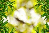 多彩背景上的杉木树 — 图库照片