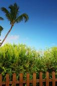 Palm tree, fence and deep blue sky — Stock Photo