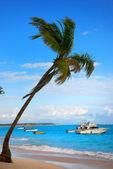 Palmtree and exotic Beach — Stock Photo