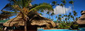 Palm e piscina — Foto Stock