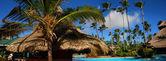 Palma y piscina — Foto de Stock