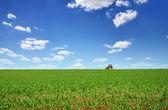 Trator cultivando 3 — Foto Stock