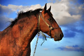 Horse and clouds — Stock Photo