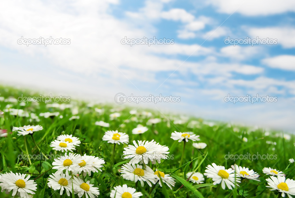 Field of daisies with clouds on the sky — Stock Photo #2075419