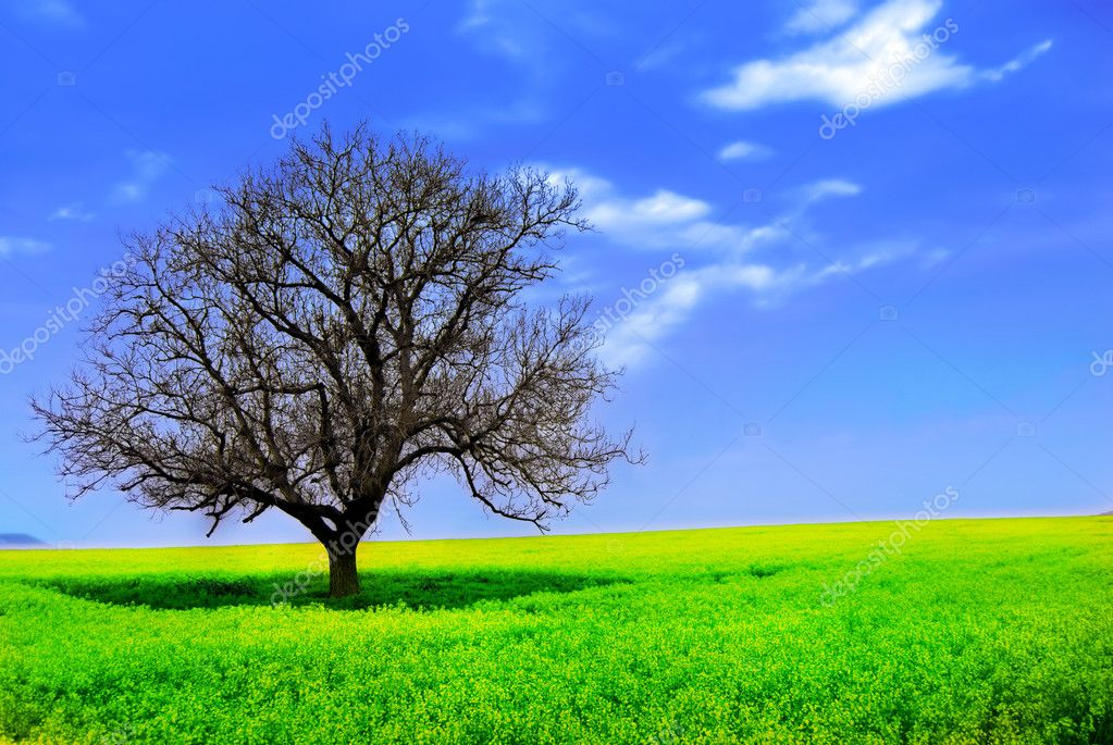 Lonely Tree in a Yellow Field — Stock Photo #2075580