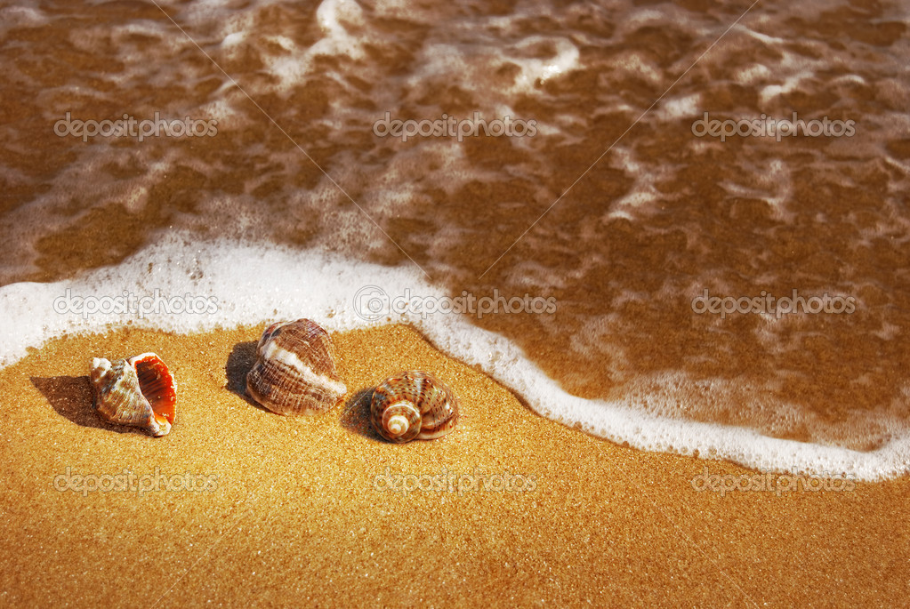 Seashells on the hot sand and foamy wave — Stock Photo #2075831