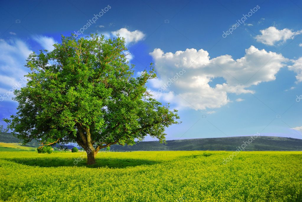 Lonely Tree in a Yellow Field — Stock Photo #2077525