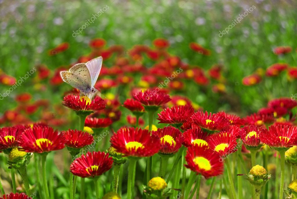 A Butterfly resting on a red flower. — Stock Photo #2077644