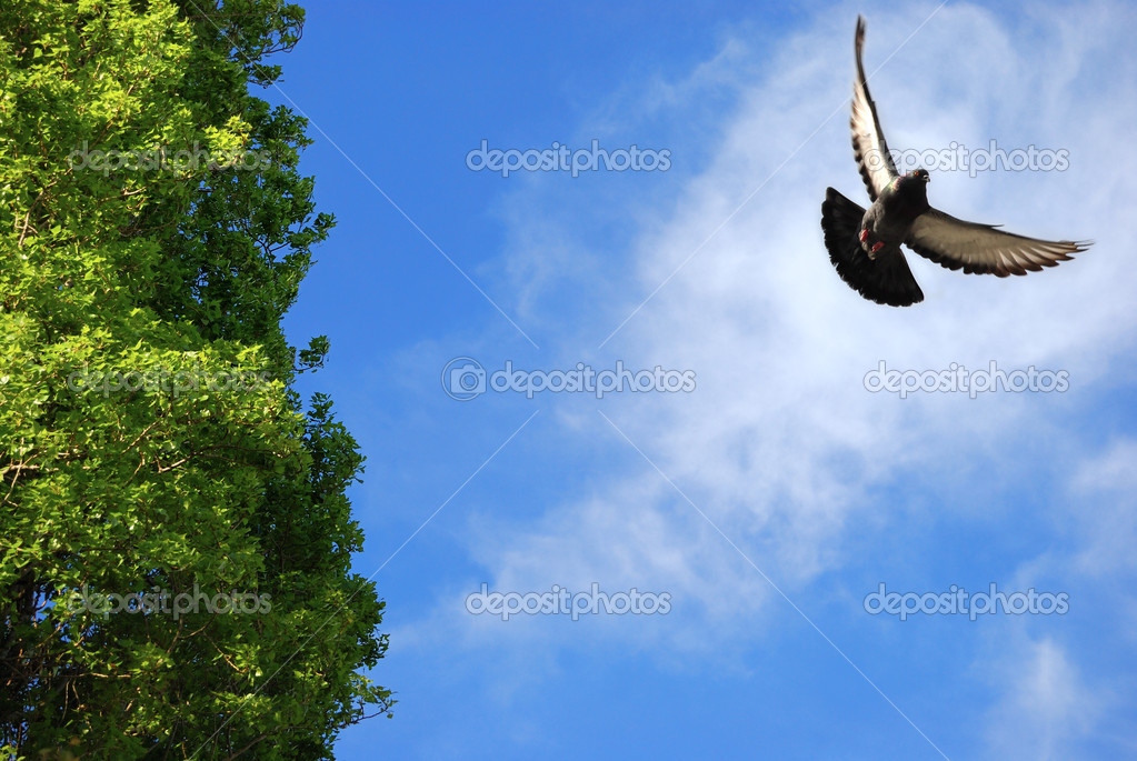 Flying bird In The blue Sky — Stock Photo #2078115
